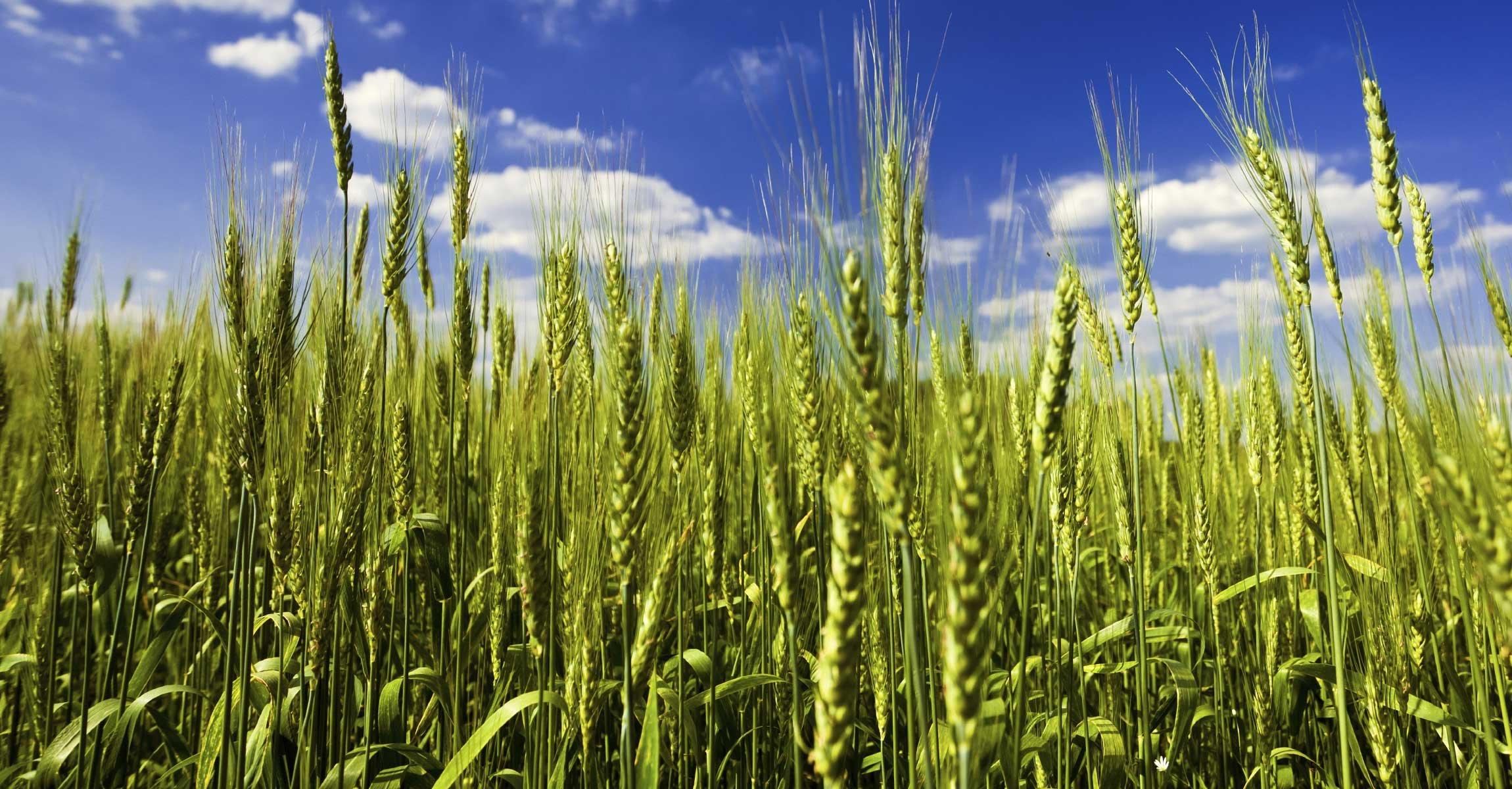 crop-background-02-5