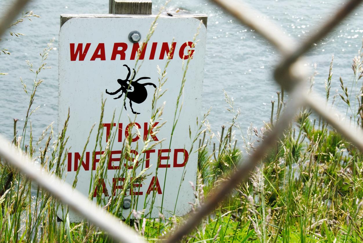 Is Lyme de nieuwe epidemie na AIDS?
