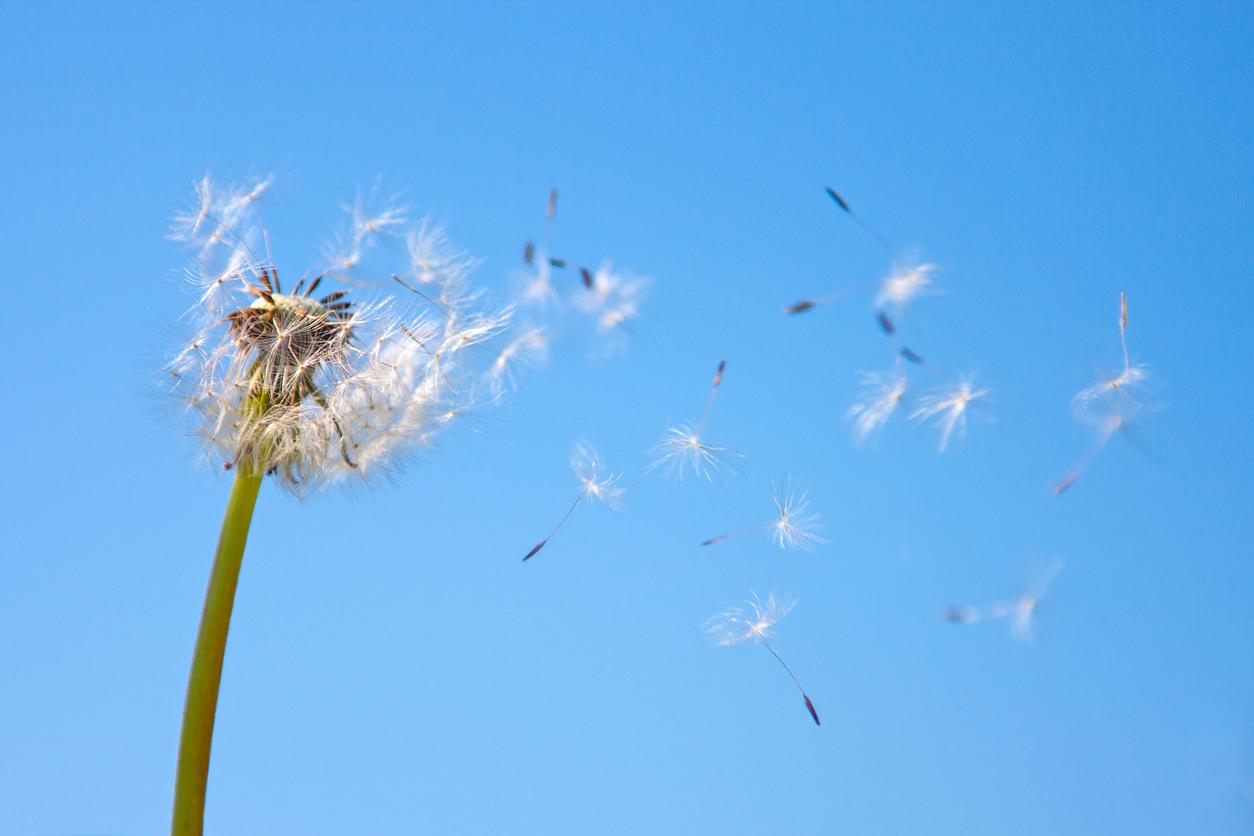 De beste remedies tegen hooikoorts