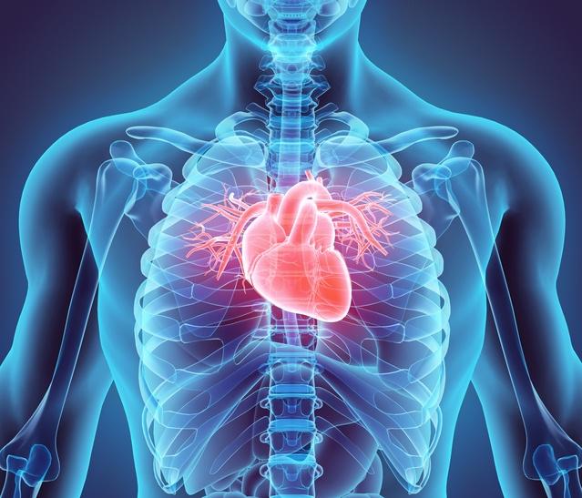 8 fascinerende feiten over het hart