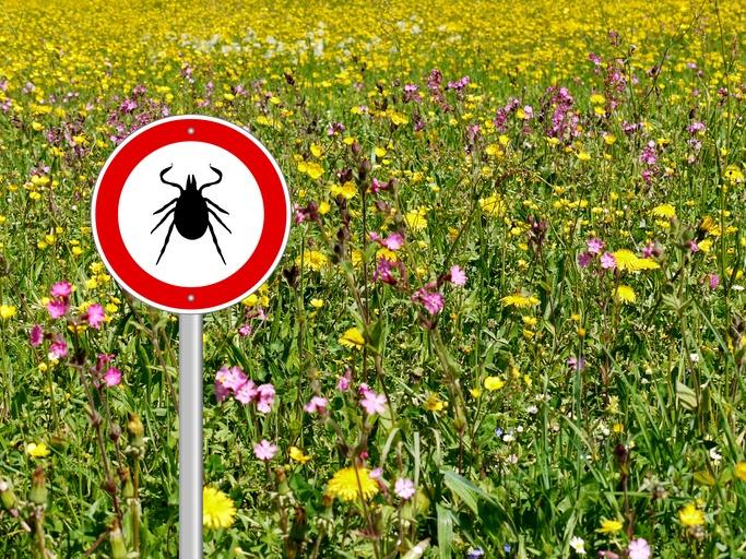 Nascholing: Lyme
