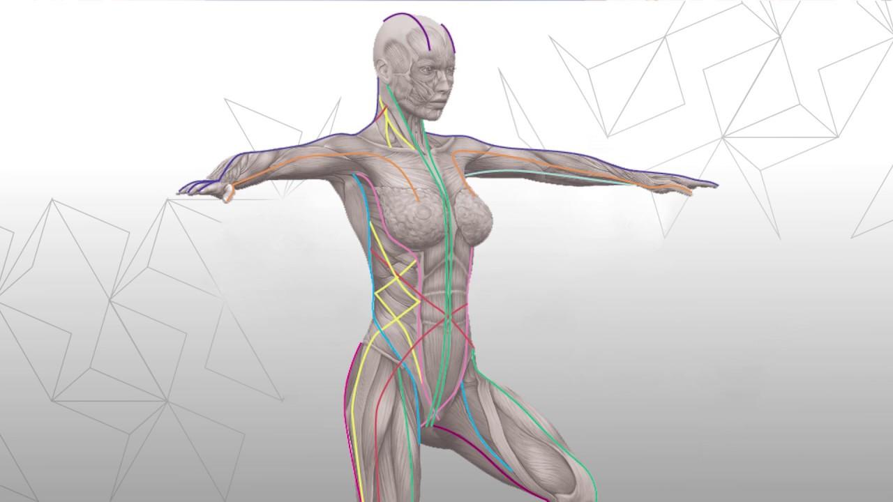 Anatomy Trains: werelds' meest complete anatomiemodel?